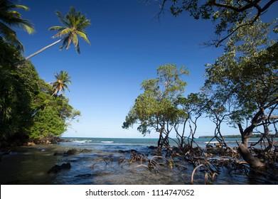 Mangrove at Bainema Beach, Boipeba Island, Bahia, Brazil