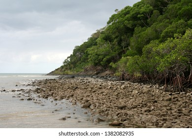 Mangrove Beach at Bloomfield Track in North Queensland, Daintree Rainforest, Cape Tribulation, Australia