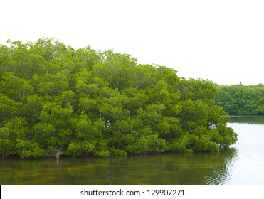 Mangrove covered island or peninsula near St Petersburg, Florida