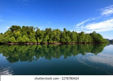 mangrove estuary of misool in western Papua