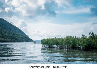 Mangrove forest along Con Dao Island, Viet Nam