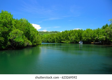 Mangrove forest along the Klong Chao canal in Koh Kood islands