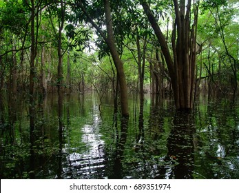 mangrove forest in amazon river