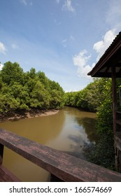 The mangrove forest around river side , Ranong, Thailand.