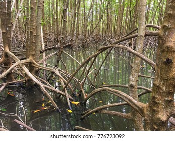 Mangrove forest for backgrounds.