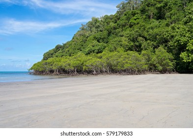 mangrove forest and beach on coral sea coast at cape tribulaton in north queensland australia