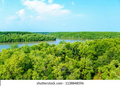 Mangrove forest - Can Gio - Vietnam