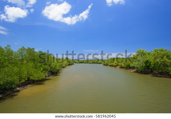 Mangrove forest in canal with blue sky