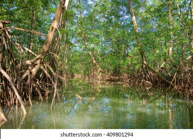 Mangrove forest from Central America, Costa Rica, Osa peninsula.
