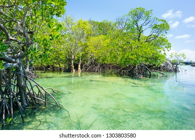 mangrove forest and emerald water of lagoon in Tanzania