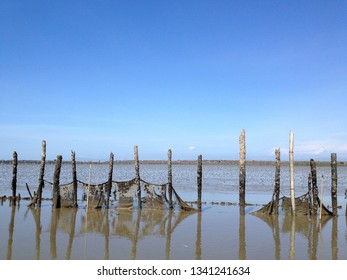 mangrove forest fishery. Oyster fisheries. blue sky view. estuary background.