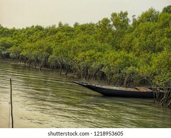 mangrove forest and fishing boat