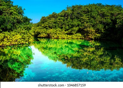 Mangrove forest growing in shallow lagoon, Mexico, Quintana Roo, Yucatan Peninsula.