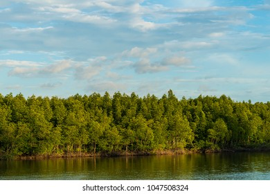 mangrove forest next to the sea with blue sky