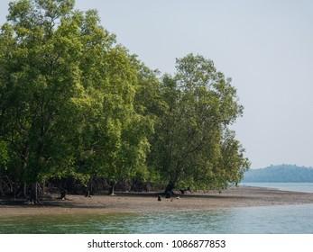 Mangrove forest on Kadan Kyun, previously King Island, the biggest island of the Myeik Archipelago, formerly the Mergui Archipelago, in the Tanintharyi Region of Myanmar.
