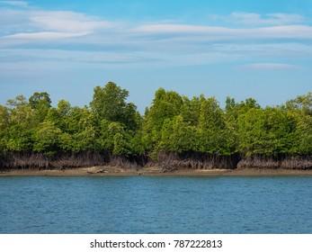 Mangrove forest on Kala Island outside Myeik, a part of the Mergui or Myeik Archipelago in the Tanintharyi Region of Southern Myanmar.