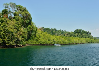 Mangrove forest on the Long Island, Andaman and Nicobar Islands, India