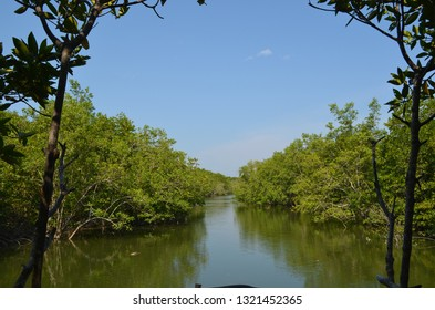 Mangrove forest on the lubuk kertang