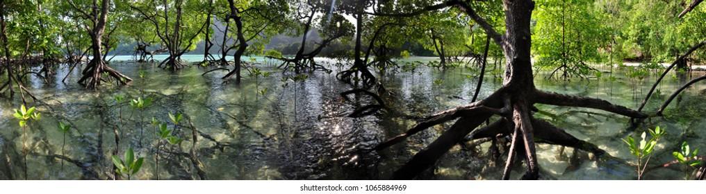 mangrove forest panoramas from Mu ko surin Thailand