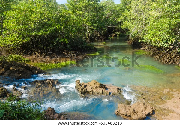 Mangrove forest and a river landscape at Thapom, Klong Song Nam, Krabi, Thailand