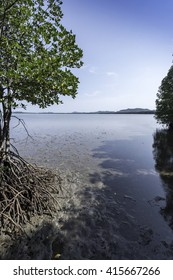 Mangrove forest showing animal habitat and ecology within the tangled roots. Mangrove and shoreline conservation Asia.