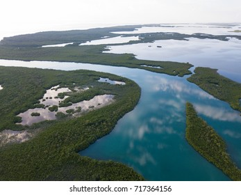 A mangrove forest stretches into the distance on the edge of Turneffe Atoll in Belize. The area supports a wide variety of marine life and mangroves serve as nurseries for fish and invertebrates.