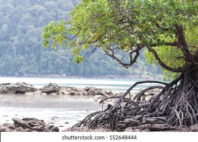 Mangrove forest in the tropical place