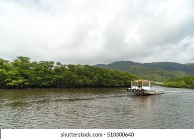 Mangrove Forest at upper stream area of Nakama River in Iriomote Island, Okinawa Japan.