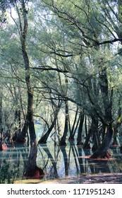 Mangrove forest, Villetta Barrea, Abruzzo, Italy