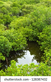 Mangrove forest and water in Florida seen from above