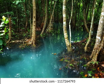 mangrove forests in Krabi province Thailand.Fair in blurred,Soft focus,Select focus
