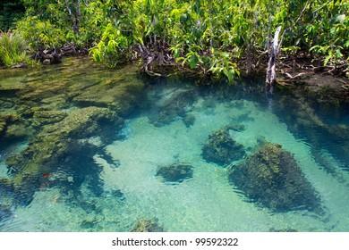 Mangrove Forests, Krabi, Thailand