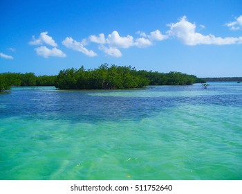 Mangrove forests, mangroves in the Caribbean beaches, Caribbean Island, Dominican Republic