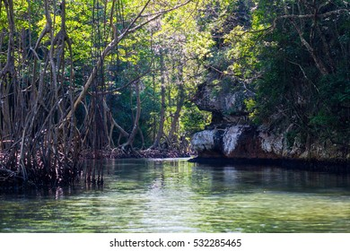 Mangrove forests in National park Los Haitises Dominican Republic