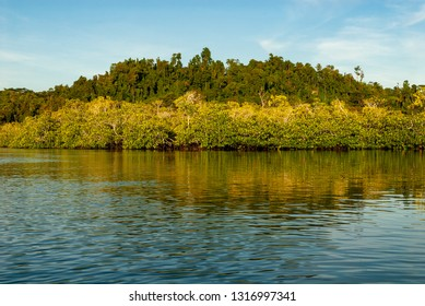 Mangrove forests on Togean islands