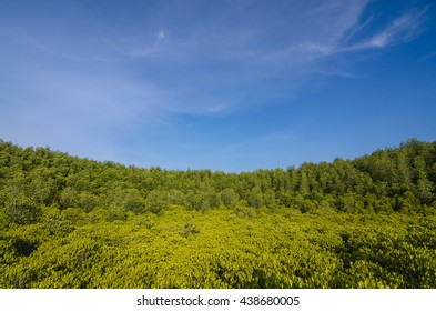mangrove forrest, Golden Meadow Prong (Thai language) at Ra-yong, Thailand