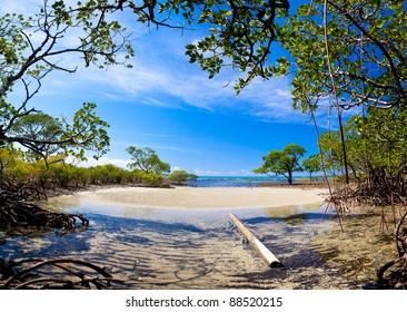 Mangrove forrest near Port Douglas, Australia