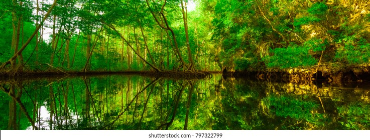 mangrove green trees in the water open roots of the caribbean island of the Dominican Republic