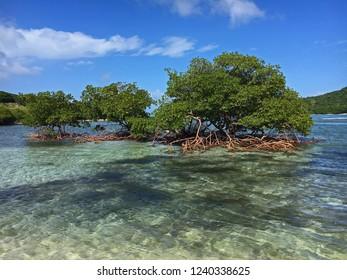 Mangrove Jost Van Dyke British Virgin Islands