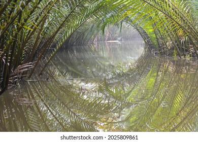 Mangrove Palm or Sugar Palm or Nipa Palm or Nypa fruticans Wurmb.