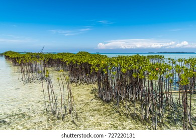 Mangrove plantations on the beach of Semak Daun Island, Kepulauan Seribu (thousand island), Jakarta, Indonesia