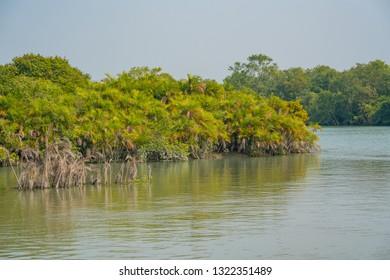 Sundarban Images, Stock Photos & Vectors | Shutterstock