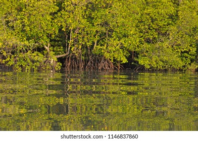 Mangrove reflection in water