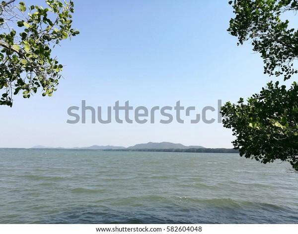 mangrove and sea