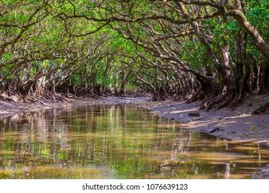Mangrove. I shot in Amami Oshima Kagoshima Prefecture Japan.