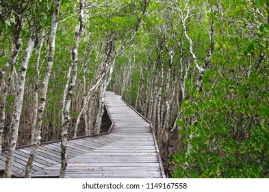 Mangrove swamp in the city of Cairns in Australia