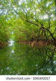 Mangrove swamp in day light