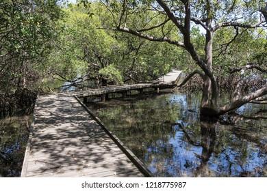Mangrove swamp Tweed Heads NSW Australia