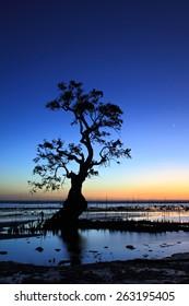 Mangrove Tree and the Dawn Sky