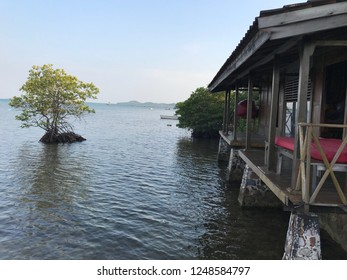 A mangrove tree in front of the cottage in Karimunjawa Island, Central Java, Indonesia